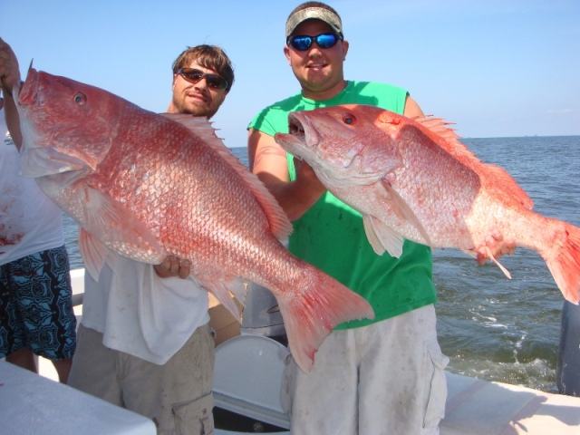 redfish snapper